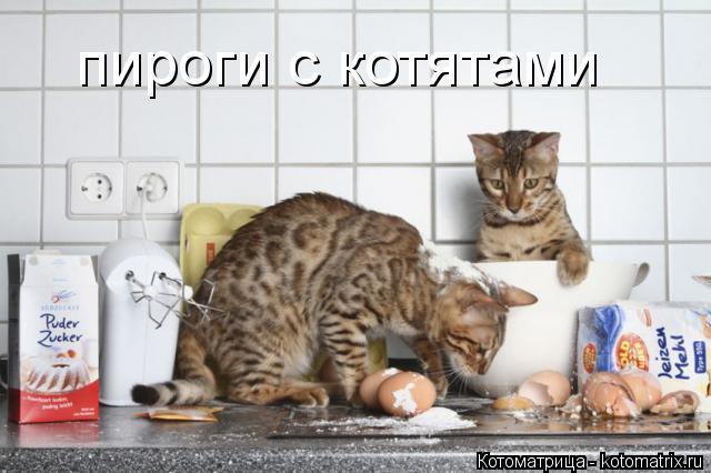 Котоматрица: пироги с котятами