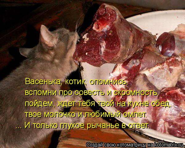 Котоматрица: вспомни про совесть и скромность, Васенька, котик, опомнись, пойдем, ждет тебя твой на кухне обед, твое молочко и любимый омлет. ... И только гл
