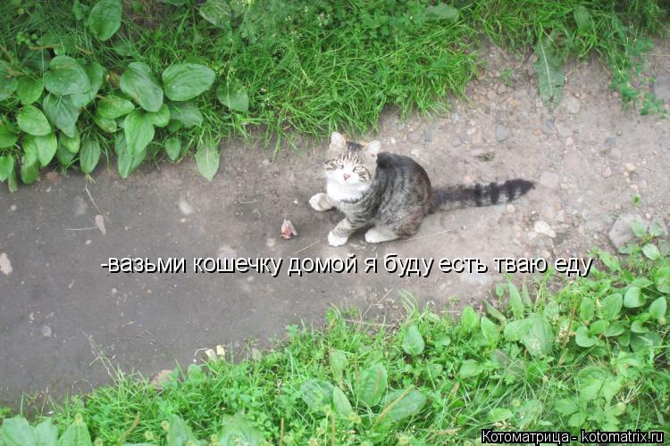 Котоматрица: -вазьми кошечку домой я буду есть тваю еду