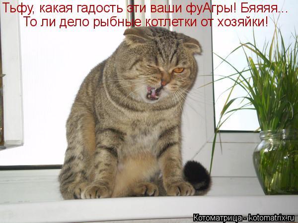 Котоматрица: То ли дело рыбные котлетки от хозяйки! Тьфу, какая гадость эти ваши фуАгры! Бяяяя...