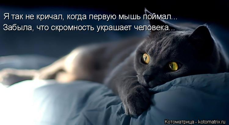 Котоматрица: Я так не кричал, когда первую мышь поймал... Забыла, что скромность украшает человека...