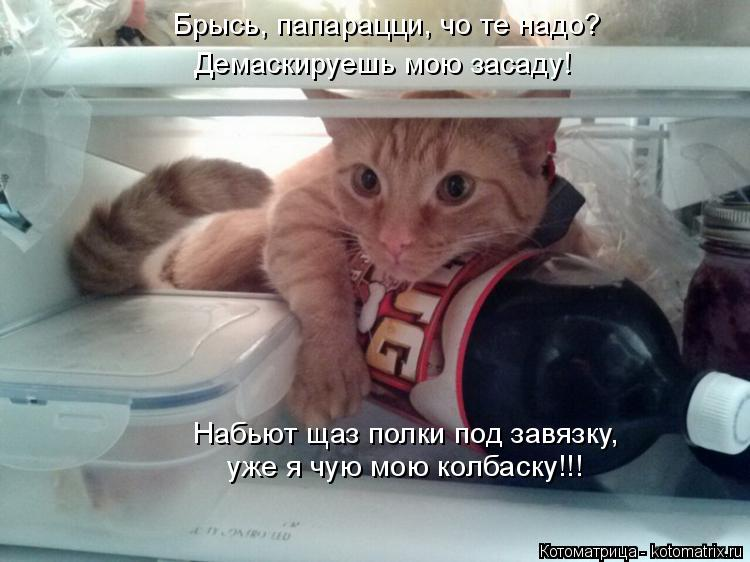 Котоматрица: Набьют щаз полки под завязку,  уже я чую мою колбаску!!! Брысь, папарацци, чо те надо? Демаскируешь мою засаду!
