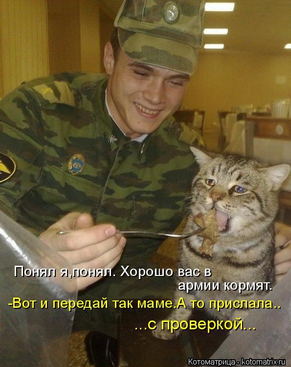 Котоматрица: Понял я,понял. Хорошо вас в  армии кормят. -Вот и передай так маме.А то прислала.. ...с проверкой...