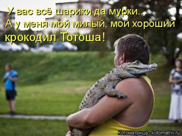 Котоматрица: У вас всё шарики да мурки...  А у меня мой милый, мой хороший крокодил Тотоша!