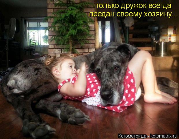 Котоматрица: только дружок всегда  предан своему хозяину....