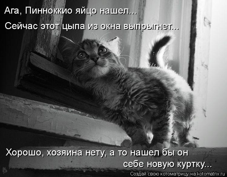 Котоматрица: Ага, Пинноккио яйцо нашел... Сейчас этот цыпа из окна выпрыгнет... Хорошо, хозяина нету, а то нашел бы он себе новую куртку...