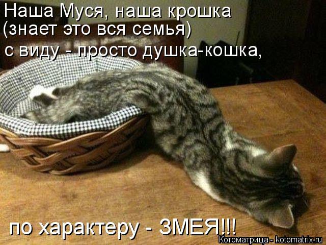 Котоматрица: Наша Муся, наша крошка  (знает это вся семья) с виду - просто душка-кошка, по характеру - ЗМЕЯ!!!