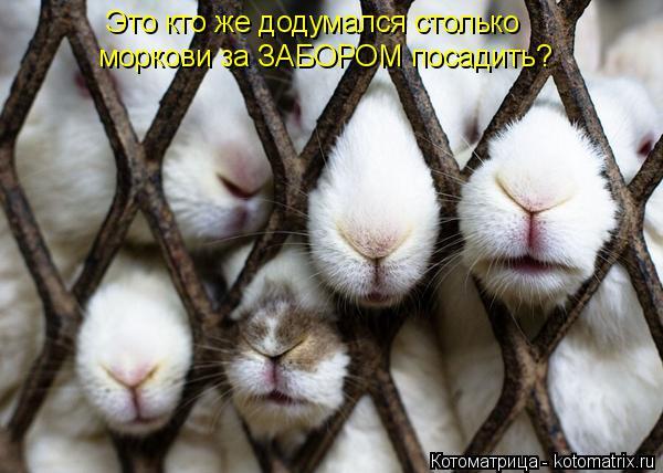 Котоматрица: Это кто же додумался столько моркови за ЗАБОРОМ посадить?