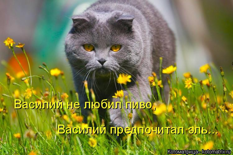 Котоматрица: Василий не любил пиво, Василий предпочитал эль...