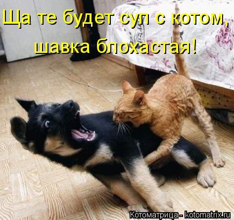 Котоматрица: Ща те будет суп с котом, шавка блохастая!