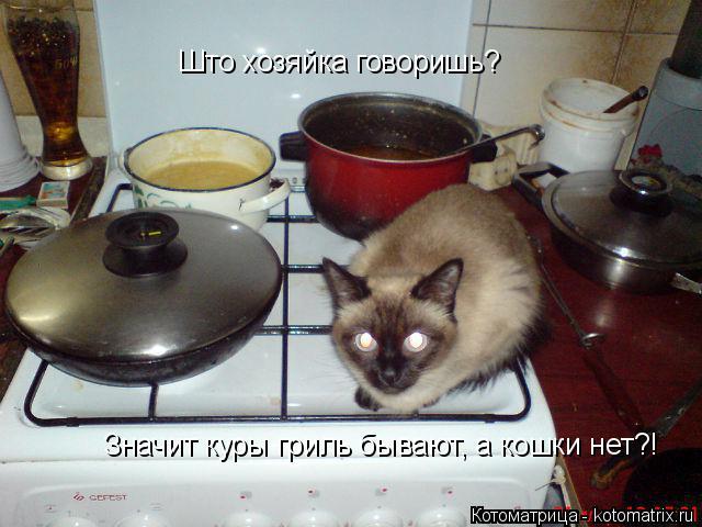 Котоматрица: Што хозяйка говоришь? Значит куры гриль бывают, а кошки нет?!