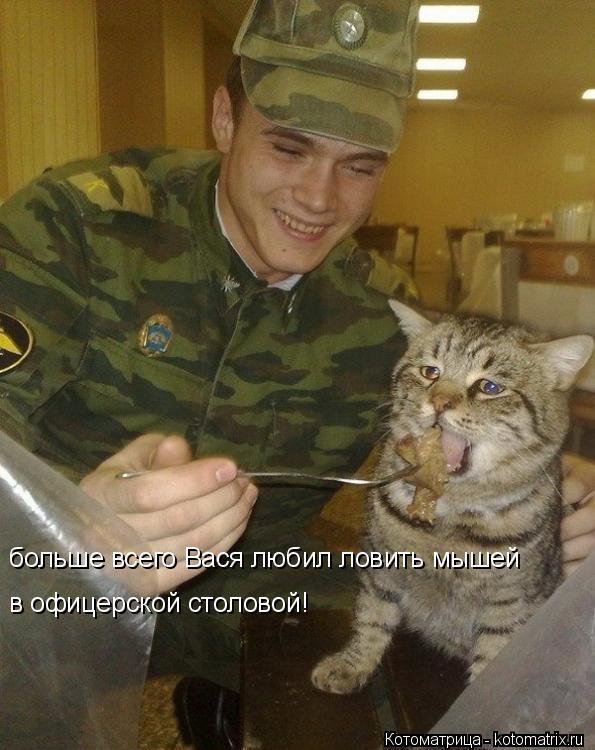 Котоматрица: больше всего Вася любил ловить мышей  в офицерской столовой!