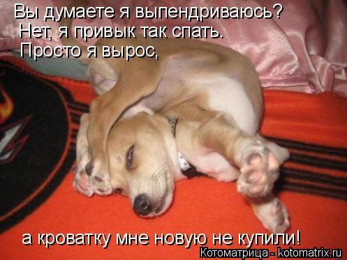 Котоматрица: Вы думаете я выпендриваюсь?  Нет, я привык так спать. Просто я вырос,  а кроватку мне новую не купили!