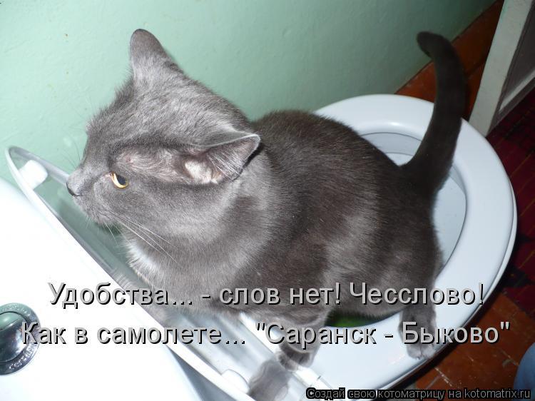 """Котоматрица: Удобства... - слов нет! Чесслово! Как в самолете... """"Саранск - Быково"""""""