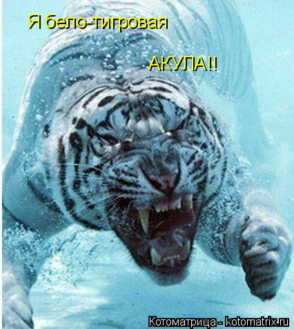 Котоматрица: Я бело-тигровая АКУЛА!!