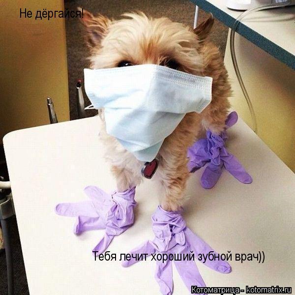Котоматрица: Не дёргайся! Тебя лечит хороший зубной врач))