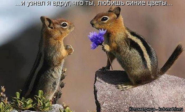 Котоматрица: ...и узнал я вдруг, что ты, любишь синие цветы...
