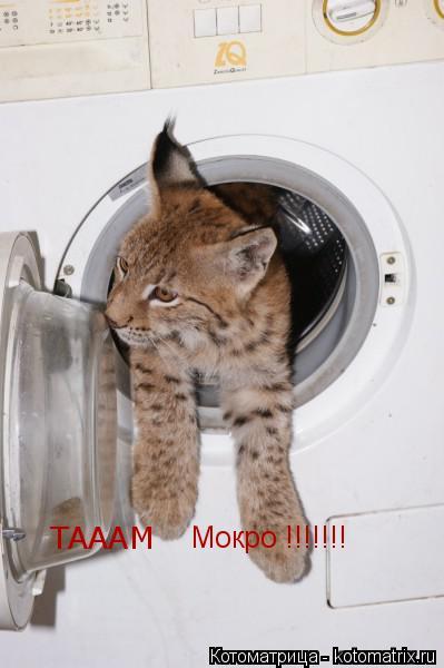 Котоматрица: ТАААМ  Мокро !!!!!!!