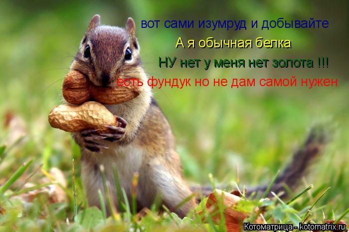 Котоматрица: вот сами изумруд и добывайте А я обычная белка НУ нет у меня нет золота !!! есть фундук но не дам самой нужен