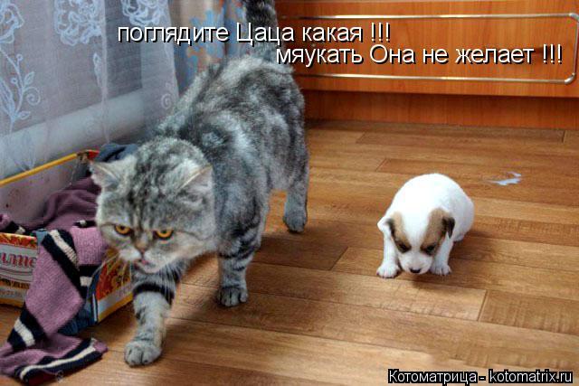 Котоматрица: поглядите Цаца какая !!! мяукать Она не желает !!!