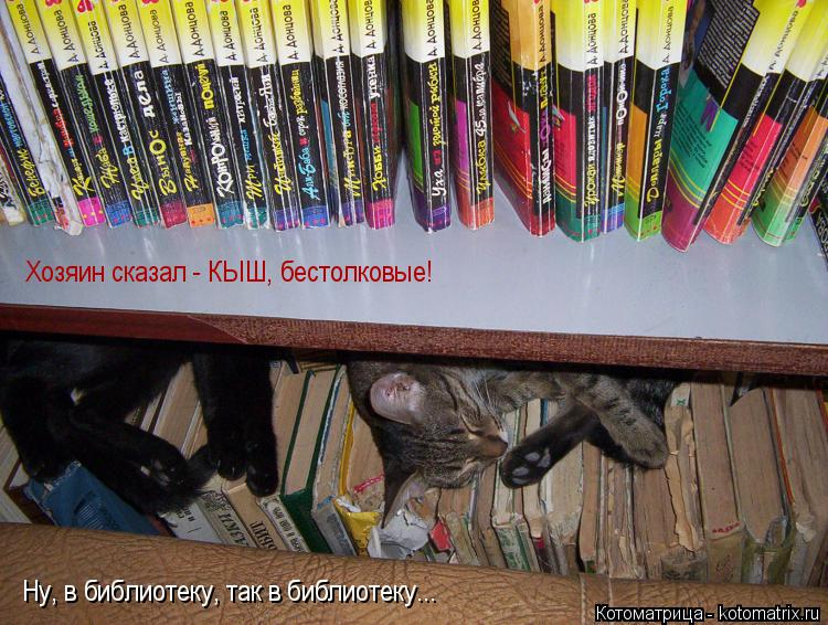 Котоматрица: Хозяин сказал - КЫШ, бестолковые! Ну, в библиотеку, так в библиотеку...