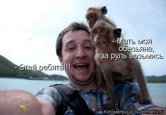 Котоматрица: - Эгей ребята!!! - Мать моя за руль возьмись обезьяна,