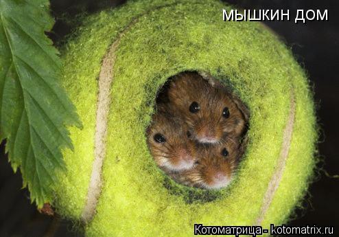 Котоматрица: мышкин дом