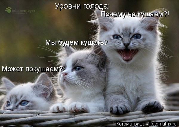 Котоматрица: Уровни голода: Может покушаем? Мы будем кушать? Почему не кушаем?!