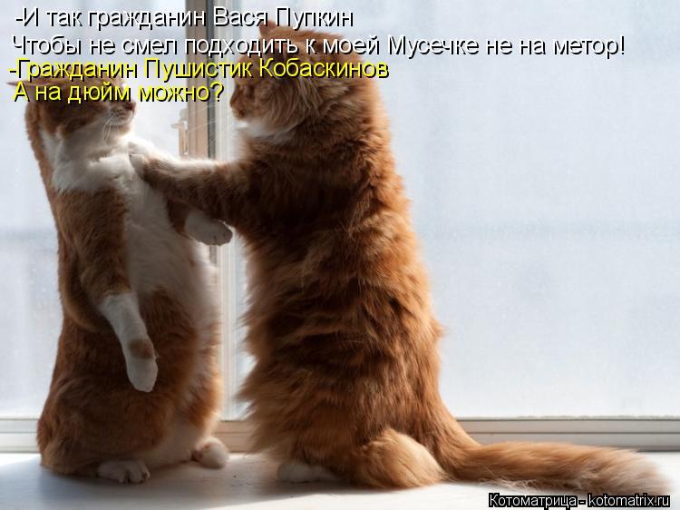 Котоматрица: -И так гражданин Вася Пупкин Чтобы не смел подходить к моей Мусечке не на метор! -Гражданин Пушистик Кобаскинов А на дюйм можно?