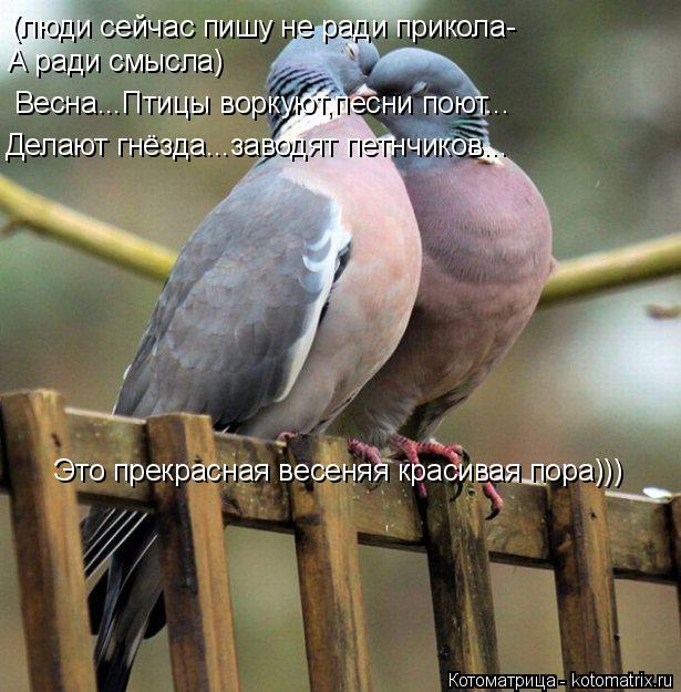 Котоматрица: (люди сейчас пишу не ради прикола- А ради смысла) Весна...Птицы воркуют,песни поют... Делают гнёзда...заводят петнчиков... Это прекрасная весеня