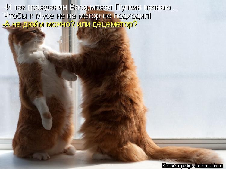 Котоматрица: -И так гражданин Вася,может Пупкин незнаю... Чтобы к Мусе не на метор не подходил! -А на дюйм можно?,или децеметор?