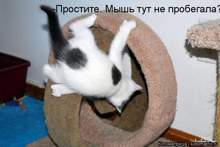 Котоматрица: -Простите. Мышь тут не пробегала?