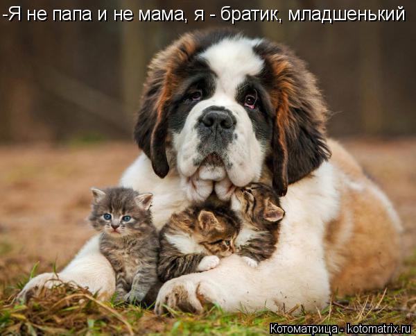 Котоматрица: -Я не папа и не мама, я - братик, младшенький