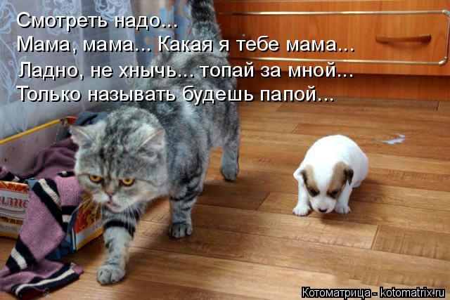 Котоматрица: Смотреть надо... Мама, мама... Какая я тебе мама... Ладно, не хнычь... топай за мной... Только называть будешь папой...
