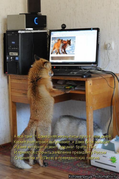 Котоматрица: А всё-таки ?! Домашняя жизнь лисы лучше, чем дикой. Кормят,поят,играют,выгуливают ,и даже блох выводят. И даже интернет освоил ,подумал братец