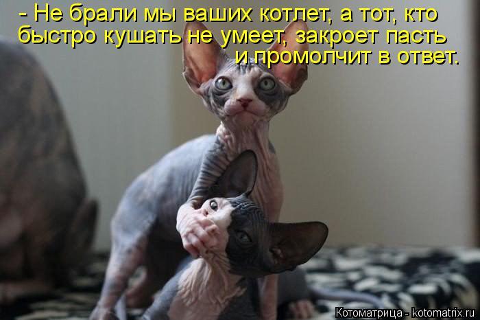 Котоматрица: - Не брали мы ваших котлет, а тот, кто быстро кушать не умеет, закроет пасть  и промолчит в ответ.