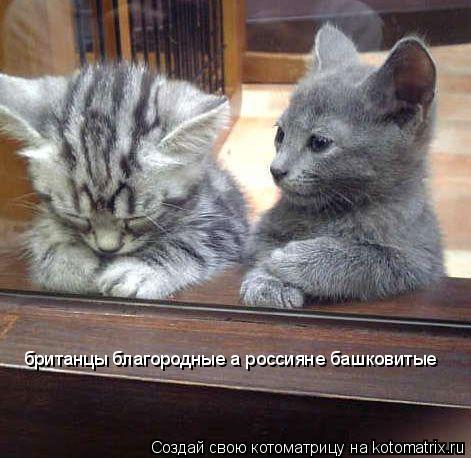 Котоматрица: британцы благородные а россияне башковитые