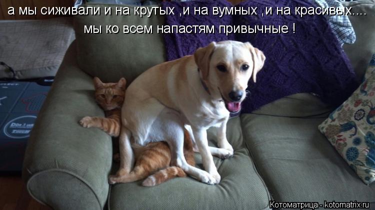 Котоматрица: мы ко всем напастям привычные ! а мы сиживали и на крутых ,и на вумных ,и на красивых....
