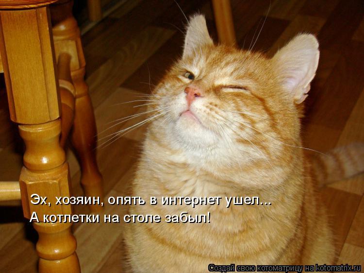 Котоматрица: Эх, хозяин, опять в интернет ушел... А котлетки на столе забыл!