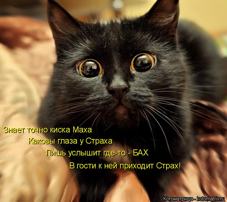 Котоматрица: Знает точно киска Маха   Каковы глаза у Страха  Лишь услышит где-то - БАХ  В гости к ней приходит Страх!