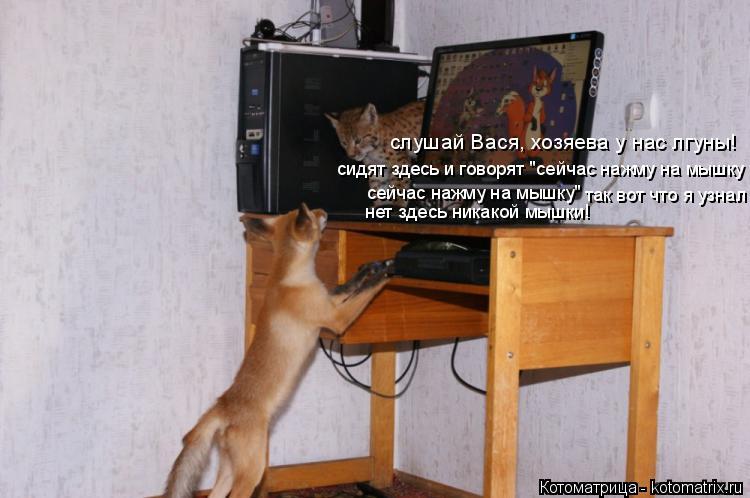 """Котоматрица: слушай Вася, хозяева у нас лгуны! сидят здесь и говорят """"сейчас нажму на мышку сейчас нажму на мышку"""" нет здесь никакой мышки!  так вот что я у"""