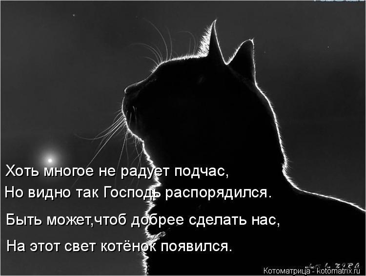 Котоматрица: Но видно так Господь распорядился. Быть может,чтоб добрее сделать нас, На этот свет котёнок появился. Хоть многое не радует подчас,