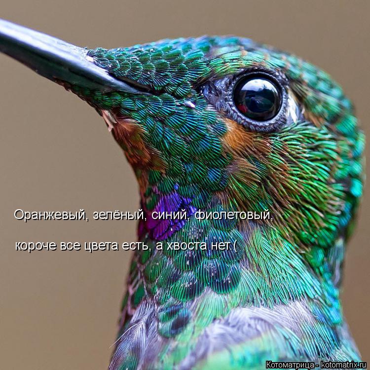 Котоматрица: Оранжевый, зелёный, синий, фиолетовый, короче все цвета есть, а хвоста нет.(