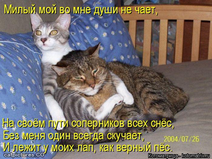 Котоматрица: Милый мой во мне души не чает, На своём пути соперников всех снёс, Без меня один всегда скучает, И лежит у моих лап, как верный пёс.