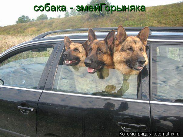 Котоматрица: собака - змейГорыняка