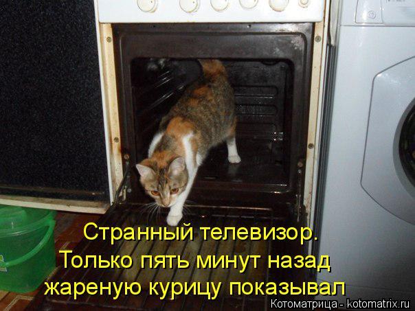 Котоматрица: Странный телевизор. Только пять минут назад жареную курицу показывал