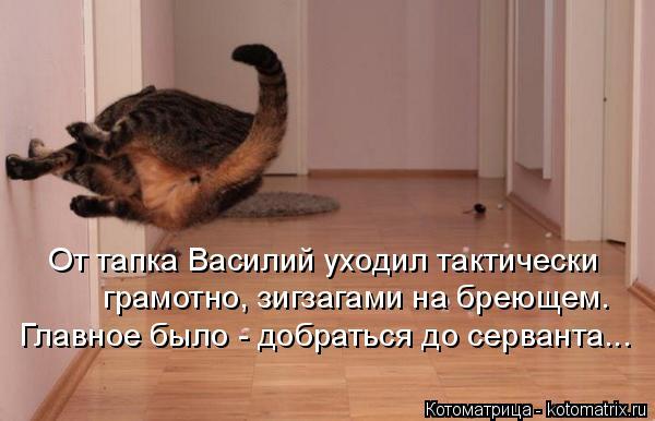 Котоматрица: От тапка Василий уходил тактически  грамотно, зигзагами на бреющем. Главное было - добраться до серванта...