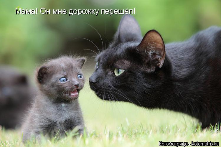 Котоматрица: Мама! Он мне дорожку перешёл!