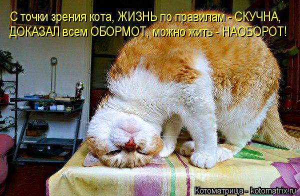 Котоматрица: С точки зрения кота, ЖИЗНЬ по правилам - СКУЧНА, ДОКАЗАЛ всем ОБОРМОТ, можно жить - НАОБОРОТ!
