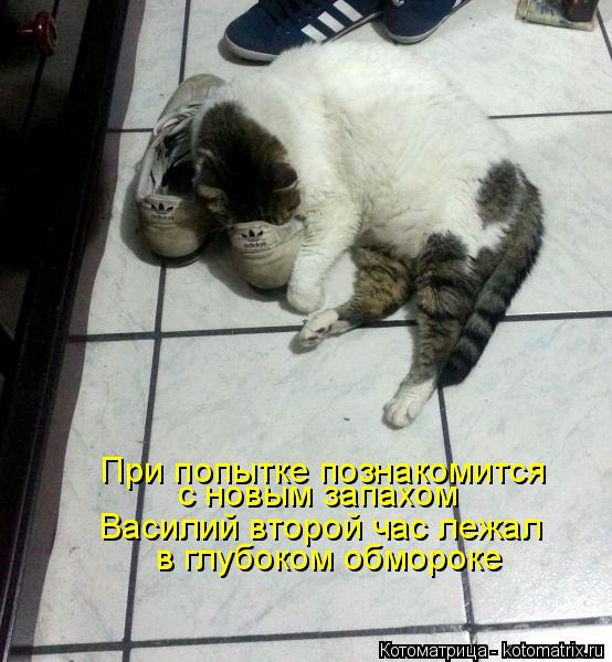 Котоматрица: Василий второй час лежал с новым запахом  При попытке познакомится  в глубоком обмороке